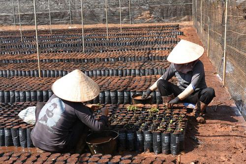 Câu chuyện đằng sau ly cà phê chất lượng Việt - 3