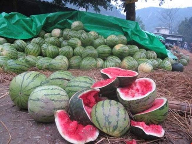 Hàng loạt nông sản Việt 'chết' vì Trung Quốc ngừng mua - 1