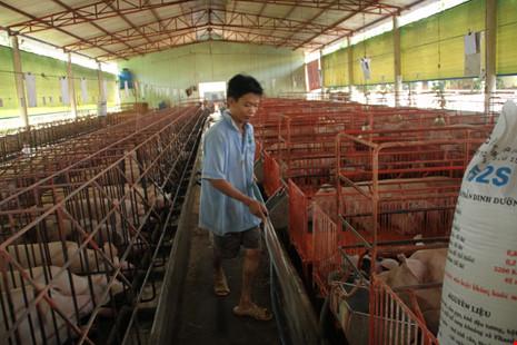 Hàng loạt nông sản Việt 'chết' vì Trung Quốc ngừng mua - 2