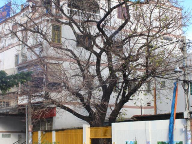 Lạ kỳ cây sộp cổ thụ trổ lộc trắng cành đúng năm mới 2018 ở Sài Gòn
