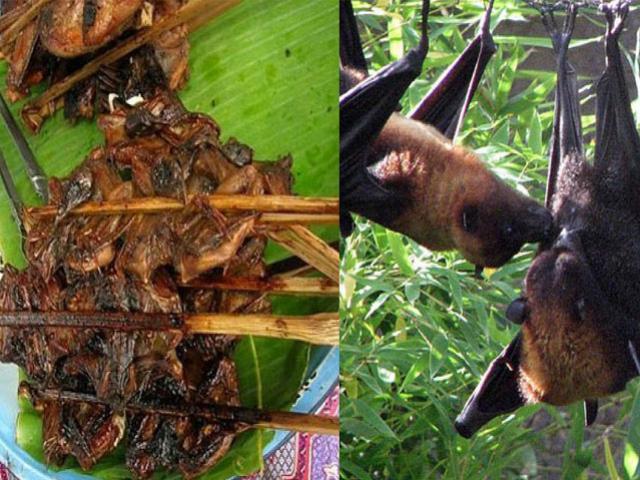 Khóc thét với món ăn từ dơi - đặc sản của dân nhậu miền Tây