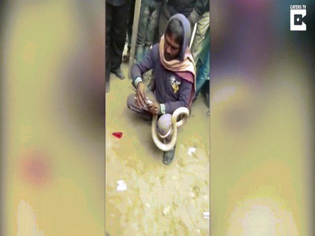 Video: Cái kết thảm của người đàn ông khâu mồm hổ mang chúa