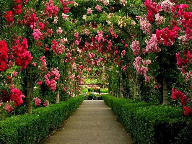 1. Công viên Butchart - Canada: Nằm tại Vịnh Brentwood, British Columbia là Vườn hoa Butchart, một trong 6 vườn hoa đang được mệnh danh là lộng lẫy nhất thế giới.