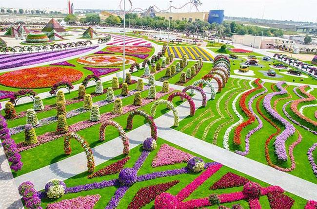 """Dubai Miracle Garden là vườn hoa duy nhất được xây dựng trên sa mạc. Người lãnh đạo vùng đất Akar cho biết cách làm """"xanh sa mạc"""" tốt nhất là tái sử dụng nước thải để xây dựng công viên nổi tiếng xinh đẹp này."""