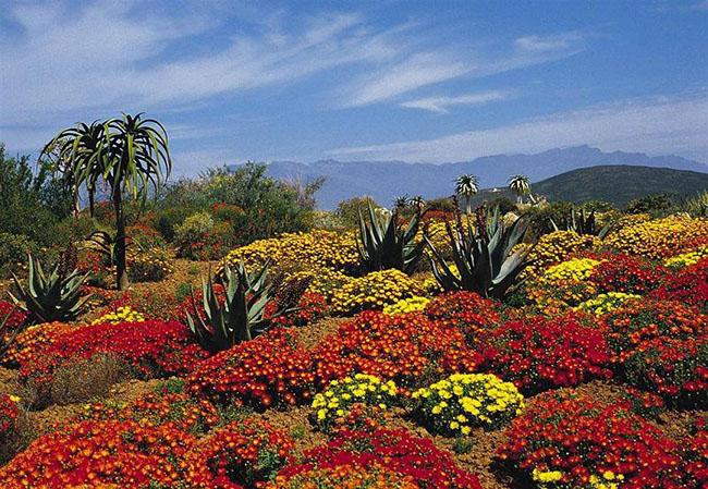 Kirstenbosch được thành lập năm 1913 là vườn thực vật đầu tiên trên thế giới được tạo ra với mục đích bảo tồn cuộc sống thực vật độc đáo của Nam Phi. Kirstenbosch cũng là khu vườn đầu tiên trong chín vườn bách thảo Nam Phi được bảo vệ như một di sản thế giới của UNESCO.