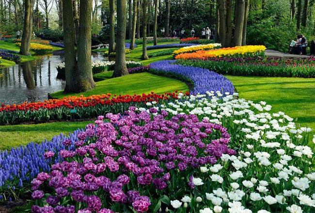 5. Công viên Keukenhof – Hà Lan: Keukenhof Garden là vườn hoa lớn thứ hai trên hành tinh, nhỏ hơn so với Dubai Miracle Garden, nhưng được coi là khu vườn nhiều màu sắc nhất trên thế giới.