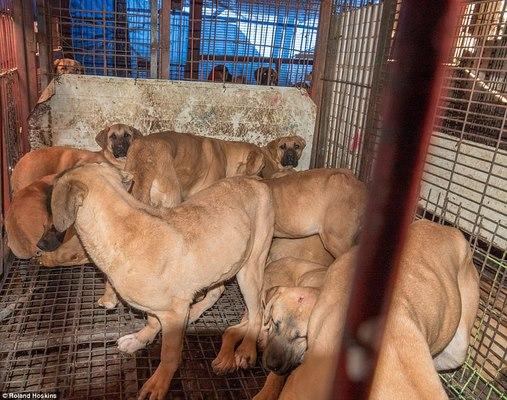 Đột nhập khu chợ thịt chó Hàn Quốc muốn giấu thế giới - 1