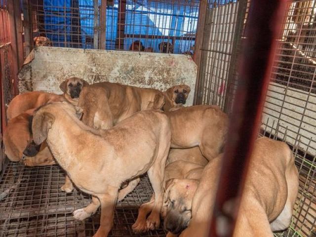 Đột nhập khu chợ thịt chó Hàn Quốc muốn giấu thế giới