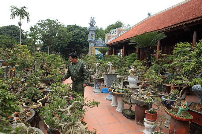 """Mãn nhãn vườn hoa giấy bonsai của người """"trăm nghề quái kiệt"""" - 1"""