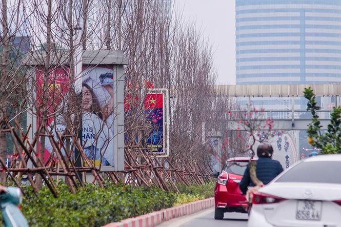 Hàng cây phong lá đỏ nảy lộc đón Tết giữa đường phố Thủ đô - 1