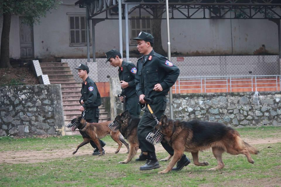 Xem cảnh sát chỉ huy chó nghiệp vụ luyện công trấn áp tội phạm - 1