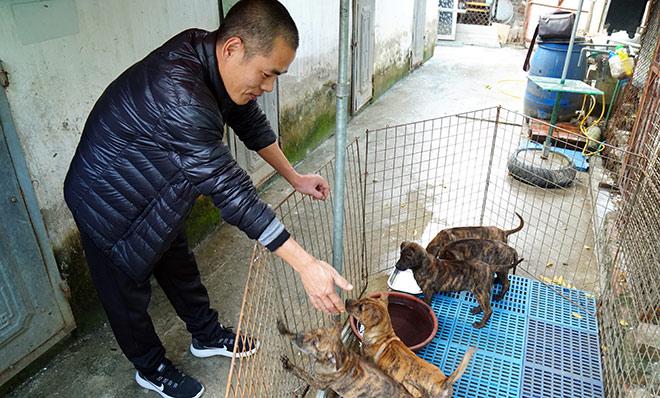 """Cận cảnh giống chó có """"lông mọc ngược"""" quý hiếm nhất Việt Nam - 1"""