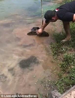 Brazil: Dân làng lao vào cứu chó bị trăn khổng lồ siết chặt - 1