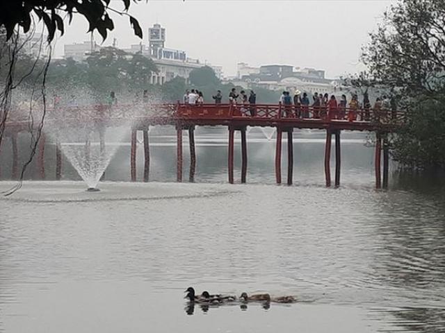 Xuất hiện đàn vịt bơi tung tăng ở Hồ Gươm