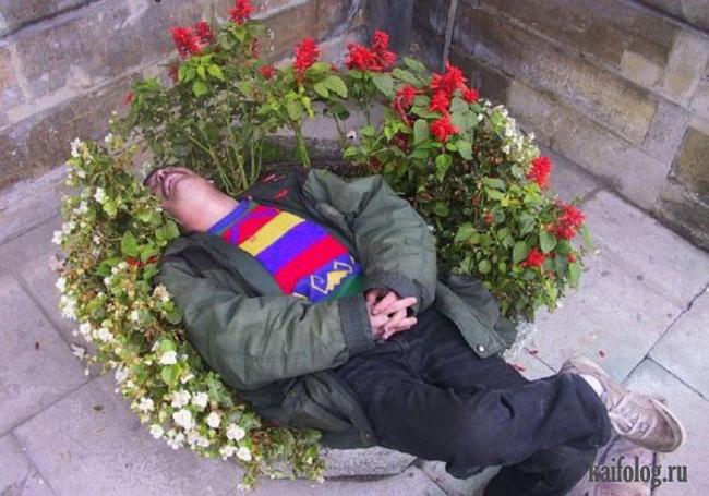 Chắc đang mơ được nằm ngủ giữa một cánh đồng hoa.