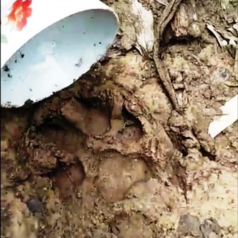 Báo hoa mai xuất hiện, người dân không dám vào rừng vì sợ bị ăn thịt - 1