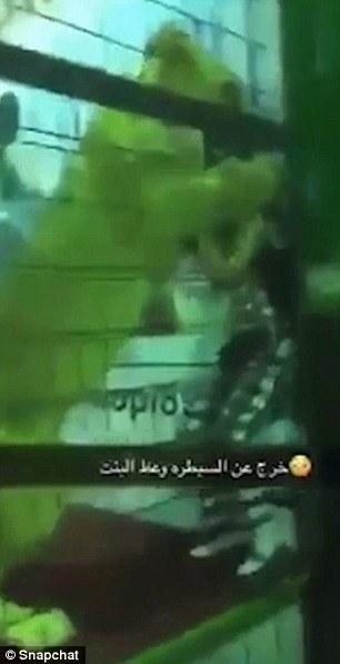 Sư tử bất ngờ lao vào tấn công bé gái ở Ả Rập Saudi - 1