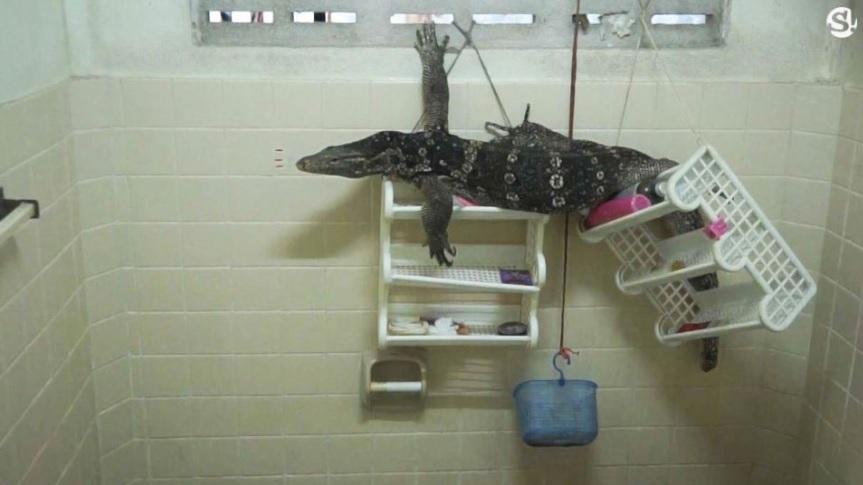 Phát hiện sinh vật gớm ghiếc khổng lồ trong phòng tắm - 1