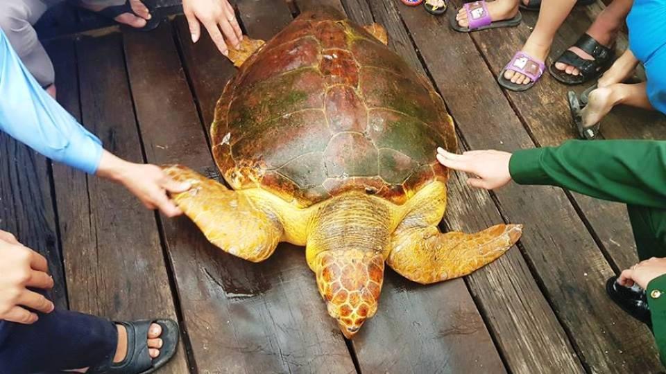 Ra biển đánh cá, bắt được rùa vàng óng nặng 80kg - 1