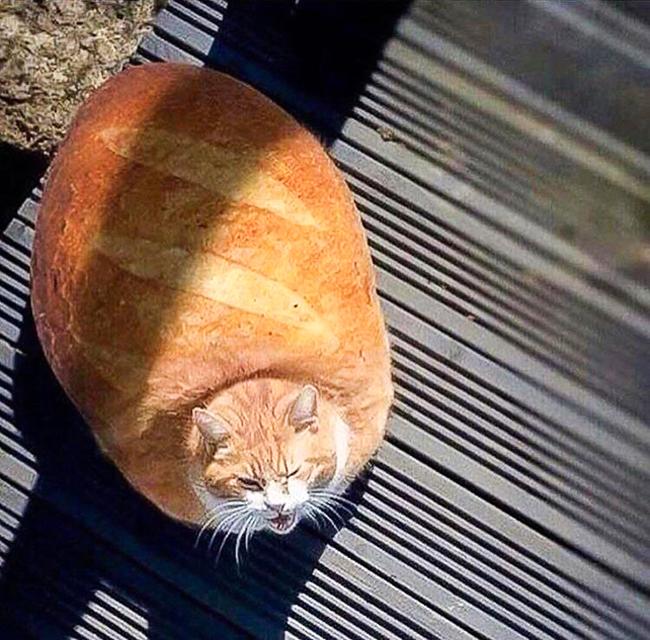 Trong như ổ bánh mỳ rồi, giờ chỉ lăn thôi chứ không đi được nữa.