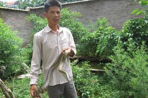 Vĩnh Phúc: Thành triệu phú nhờ nuôi rắn ráo, vịt trời - 1