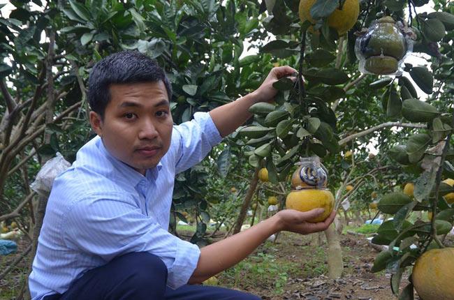 Đặc sản Tết: Trai xứ Thanh trình làng bưởi Tài Lộc giá tiền triệu - 1