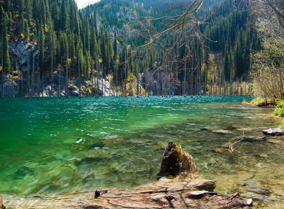 Lạc vào khu rừng cổ tích nằm sâu dưới lòng hồ ở Kazakhstan - 1