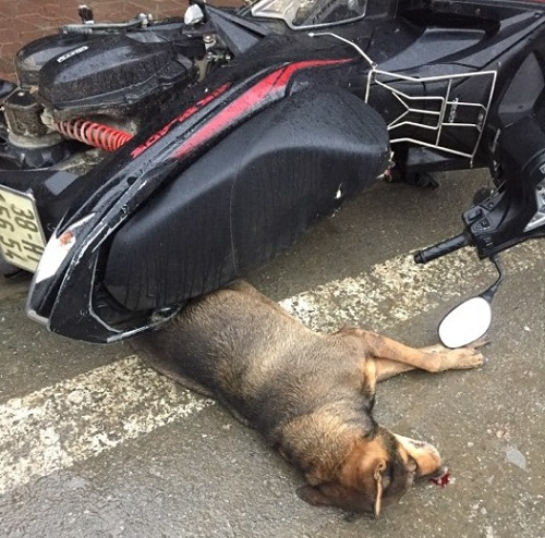 """Chó """"điên"""" xuất hiện cắn hàng chục người, cả khu chợ náo loạn - 1"""