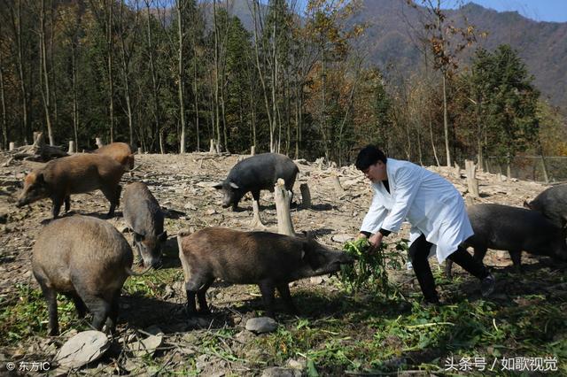 Bỏ công ty ở thành phố về quê nuôi lợn mà thành tỷ phú - 1