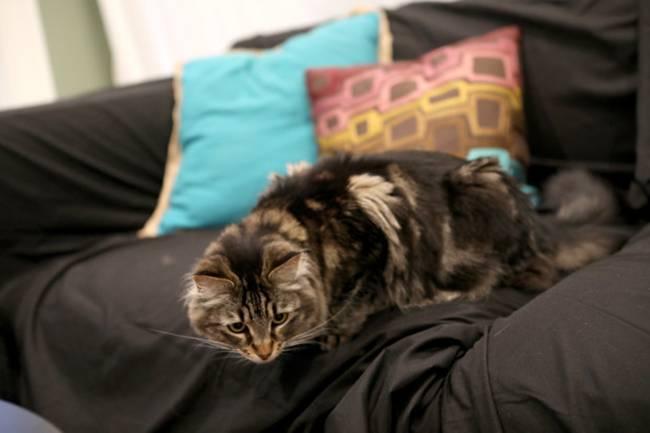 Tranh cãi nhà giàu chi gần 35 triệu thuê căn hộ... cho mèo ở - 1