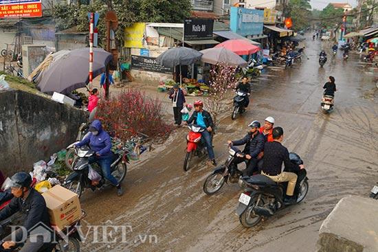 """Nắng đột ngột, đào nở bung: Chủ vườn hoa Nhật Tân than """"móm nặng"""" - 1"""