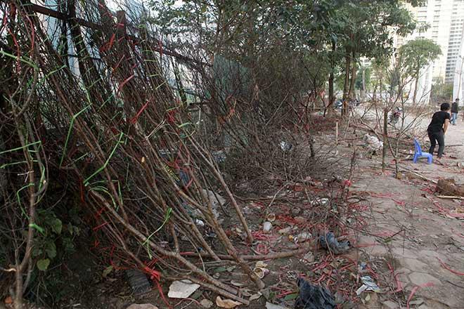 """Người dân đi """"mót"""" đào rừng tại Hà Nội ngày cuối năm - 1"""