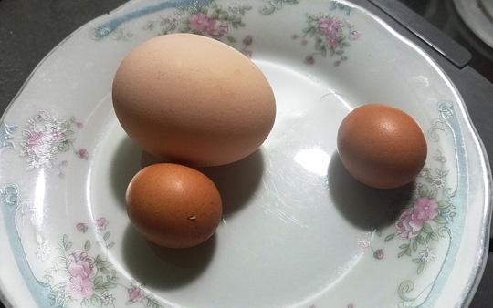 Kỳ lạ gà trống đẻ trứng ngày cận Tết - 1