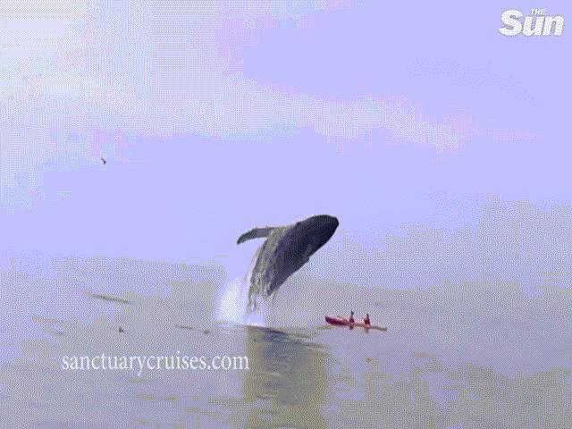 Video: Cá voi khổng lồ nặng 30 tấn từ trên cao lao xuống du khách