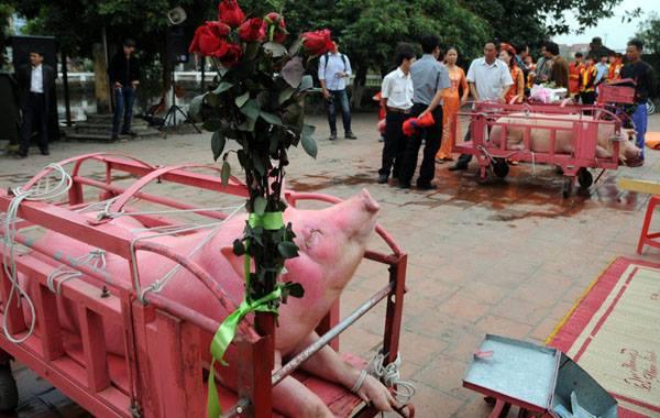 Năm Kỷ Hợi, làng Ném Thượng có bỏ lễ hội chém lợn? - 1