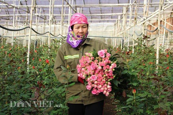 Sát ngày Lễ Tình nhân, giá hoa hồng Đà Lạt tăng chóng mặt - 1