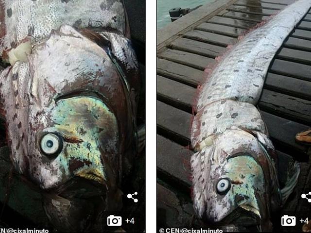 """Ngư dân Peru bắt được """"rồng biển"""" có thể dự báo thảm họa khủng khiếp"""