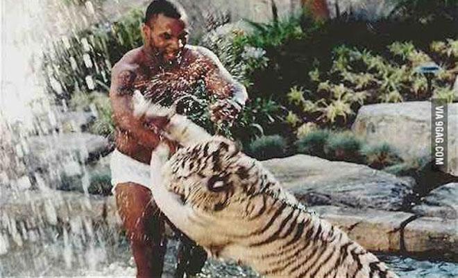 Ngông như Mike Tyson: Đùa giỡn 3 hổ dữ, muốn đánh nhau với khỉ đột 160kg - 1