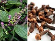 Sức khỏe 24h - Chạy thoát đờm, ho, khó thở, COPD 20 năm nhờ thảo dược có ngay trong vườn