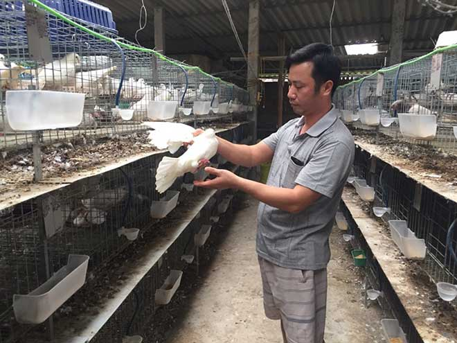Give rich thanks to white bird cages, interest many hundred million / year - 1