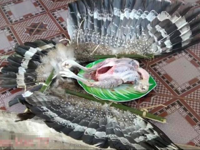 """Xác minh thông tin """"chim quý"""" bị 2 anh em Tam Mao làm thịt rồi quay clip"""