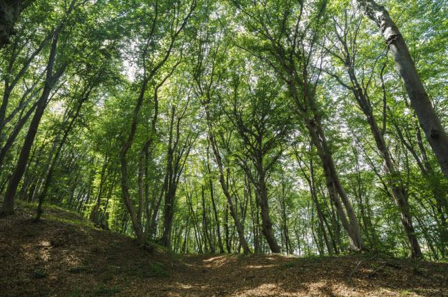 Khu rừng được đặt tên theo một người chăn cừu và đàn cừu 200 con mất tích bí ẩn tại đây.