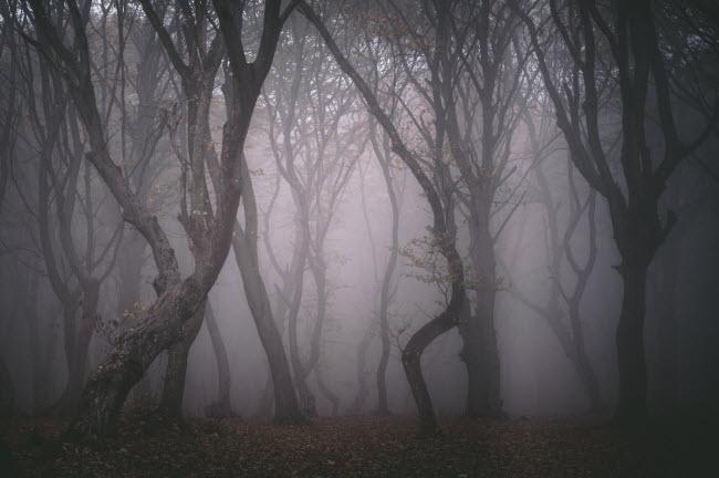 Rừng Hoia Baciu nằm gần thành phố Cluj-Napoca ở vùng Transylvania, Romania. Nó bao phủ một khu vực có diện tích khoảng 295 ha.