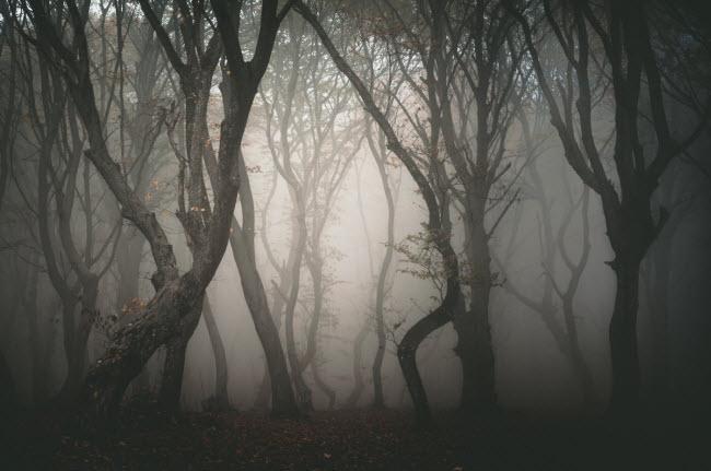 Kỳ lạ hơn nữa, tất cả cây trong rừng Hoia Baciu tạo thành các hình xoắn ốc có hướng theo chiều kim đồng hồ.