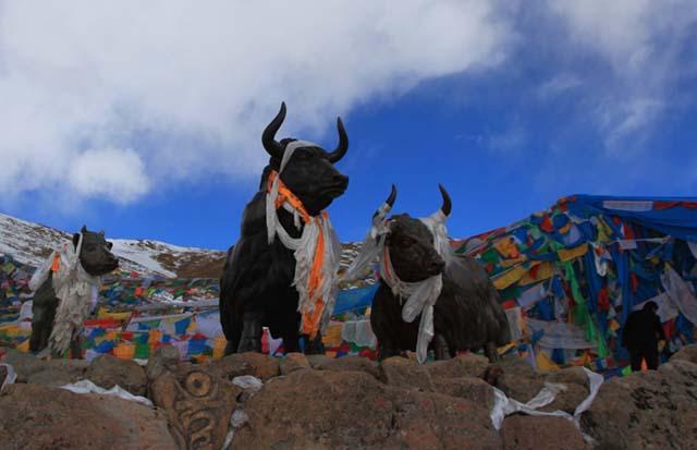 Lý do gì khiến dân du lịch bụi rủ nhau đẩy bánh xe 80kg đến Tây Tạng - 1