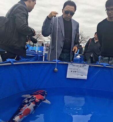 Loài cá Nhật Bản này có gì đặc biệt mà từng được đấu giá tới 47 tỷ? - 1