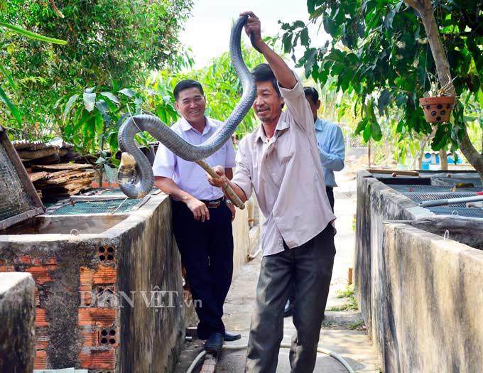 Kiên Giang: 5 năm nuôi mãng xà cực độc, bị cắn bao lần nhưng vẫn mê - 1