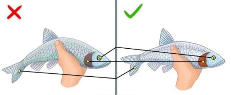 Muốn chọn cá tươi ngon chỉ cần nhìn 6 điểm này - 1