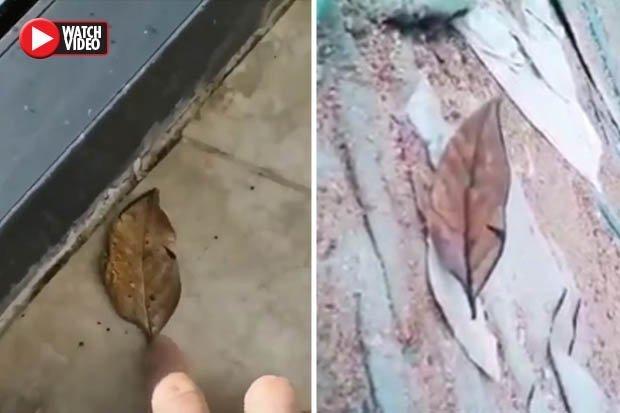 """Video: Người đàn ông nhặt lá khô, không ngờ """"chiếc lá"""" tung cánh bay - 1"""
