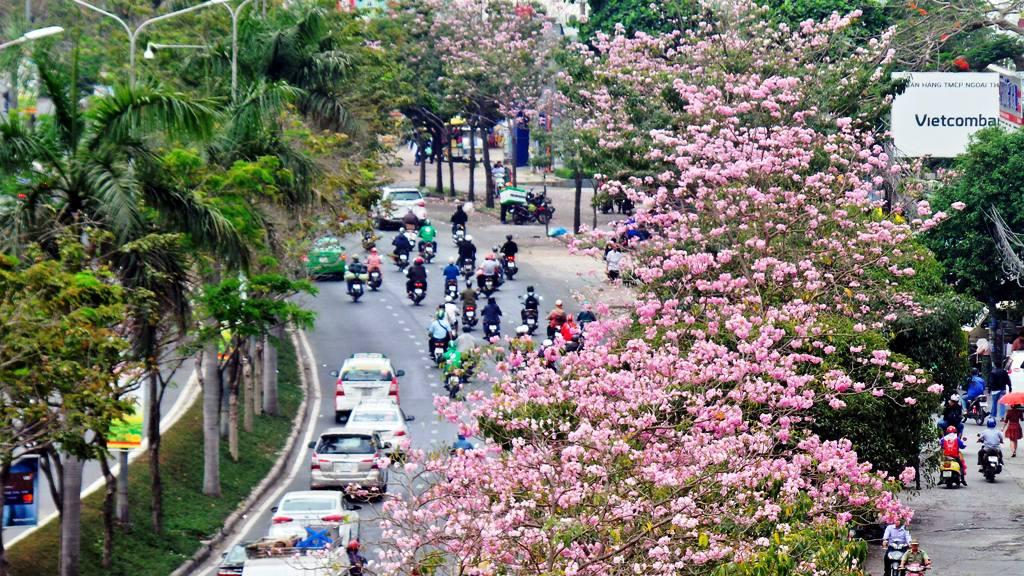 """Không ngờ giữa Sài Gòn lại có """"thiên đường"""" hoa kèn hồng đẹp như thế này - 1"""